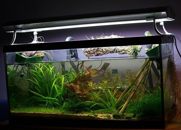 cherry shrimp tank setup