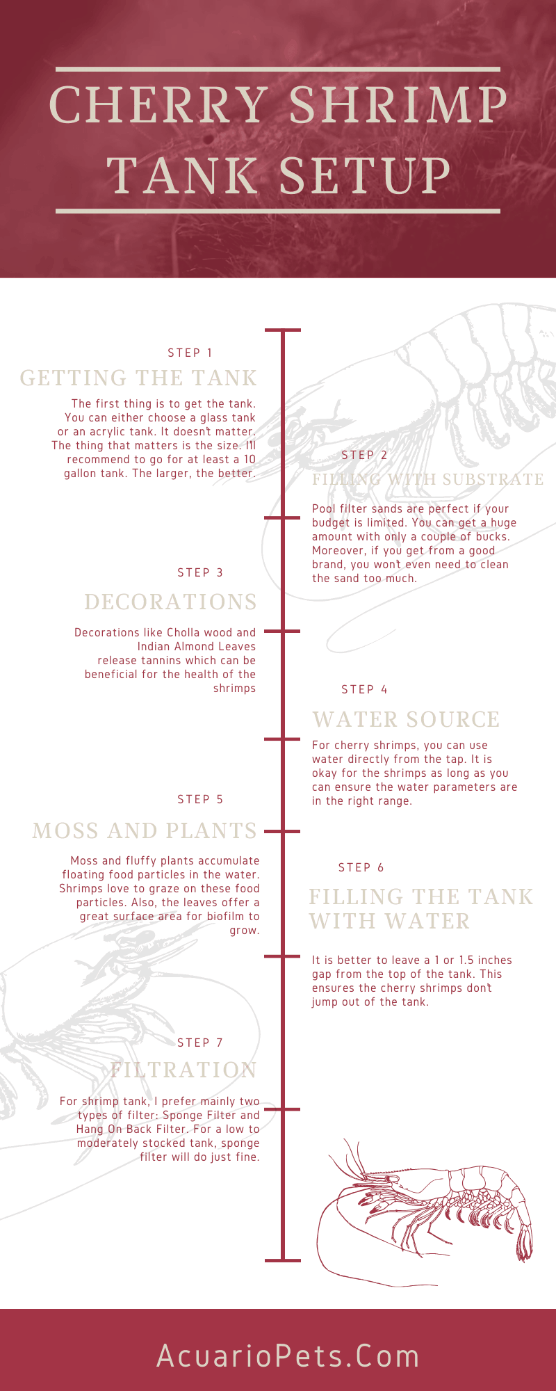 cherry shrimp tank setup infographic