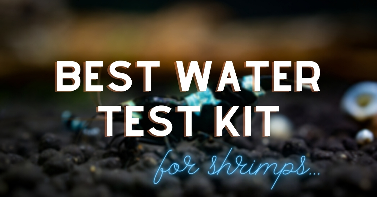 Best Water Test Kit for shrimps