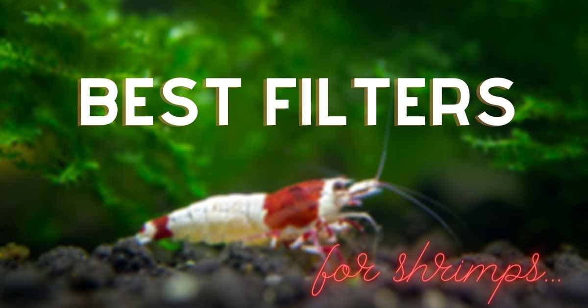 Best filters for shrimps