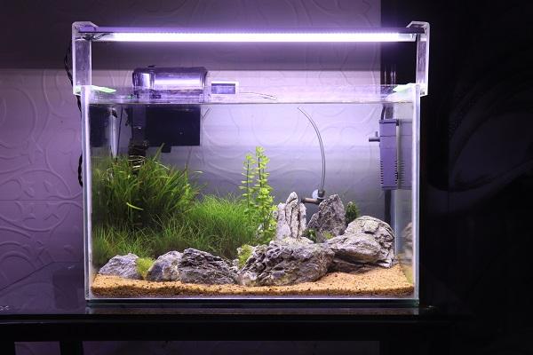 how to properly setup a ghost shrimp habitat