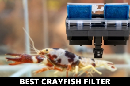 BEST CRAYFISH FILTER