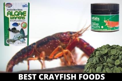 BEST CRAYFISH FOODS