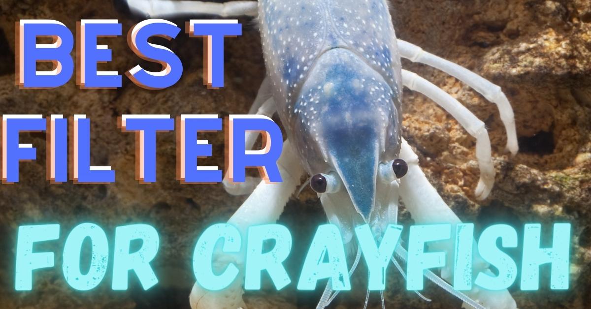 Best Filter For Crayfish