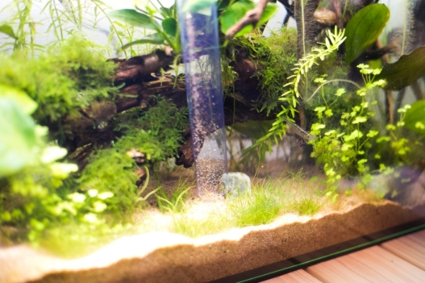 How To Clean A Crayfish Tank