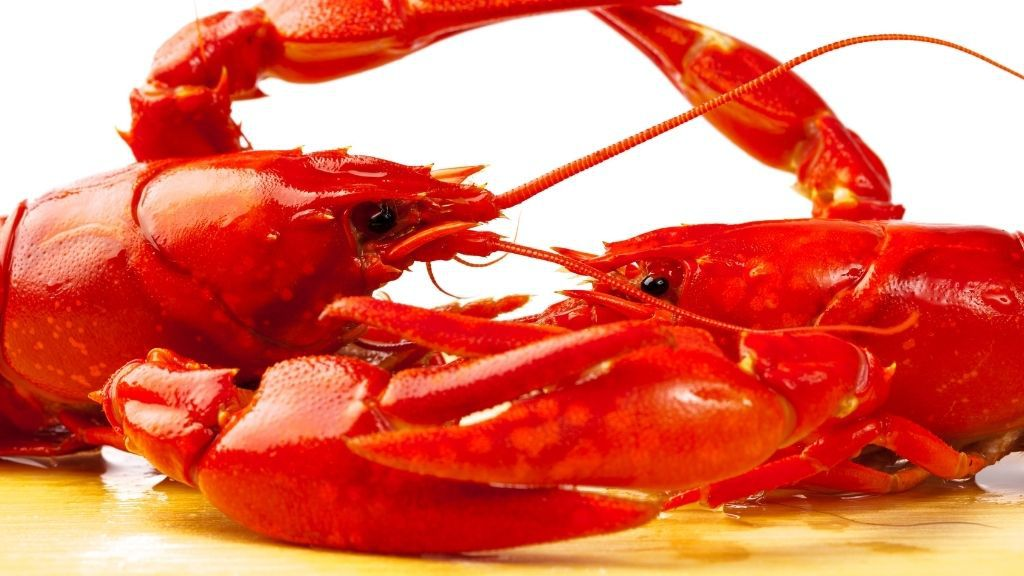 How Do Crayfish Protect Themselves