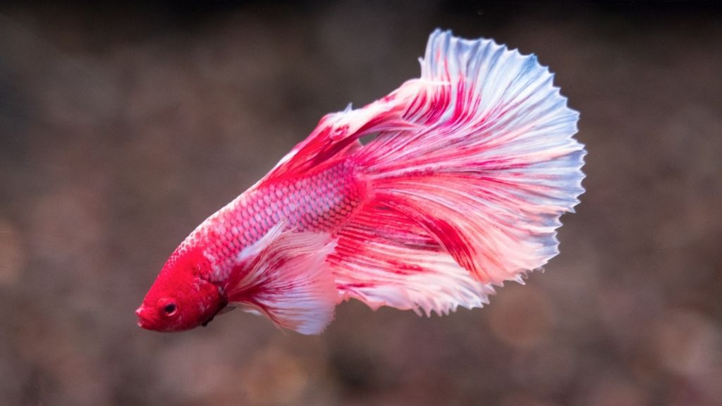 How To Find The Best Lighting For Your Betta