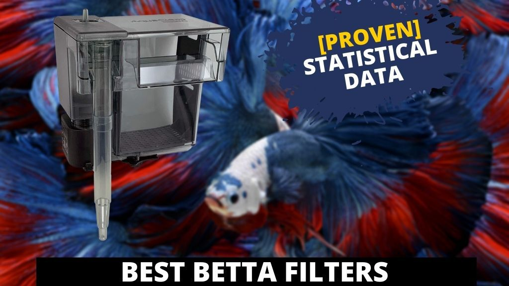 BEST betta filters featured