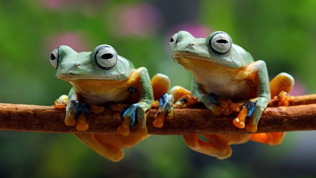 Can You Keep Multiple Tree Frogs Together