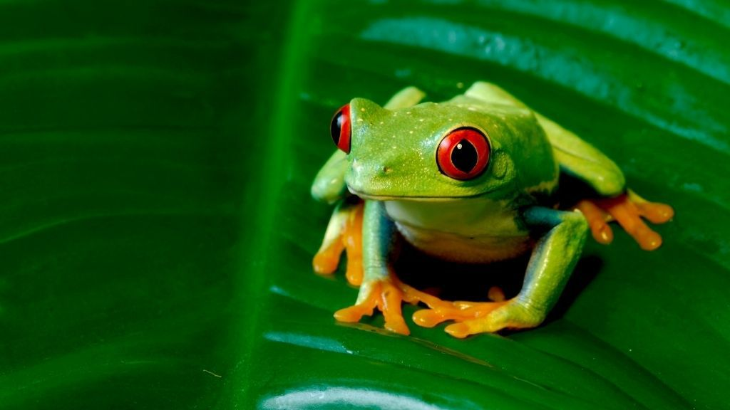 Why Tree Frogs Change Color