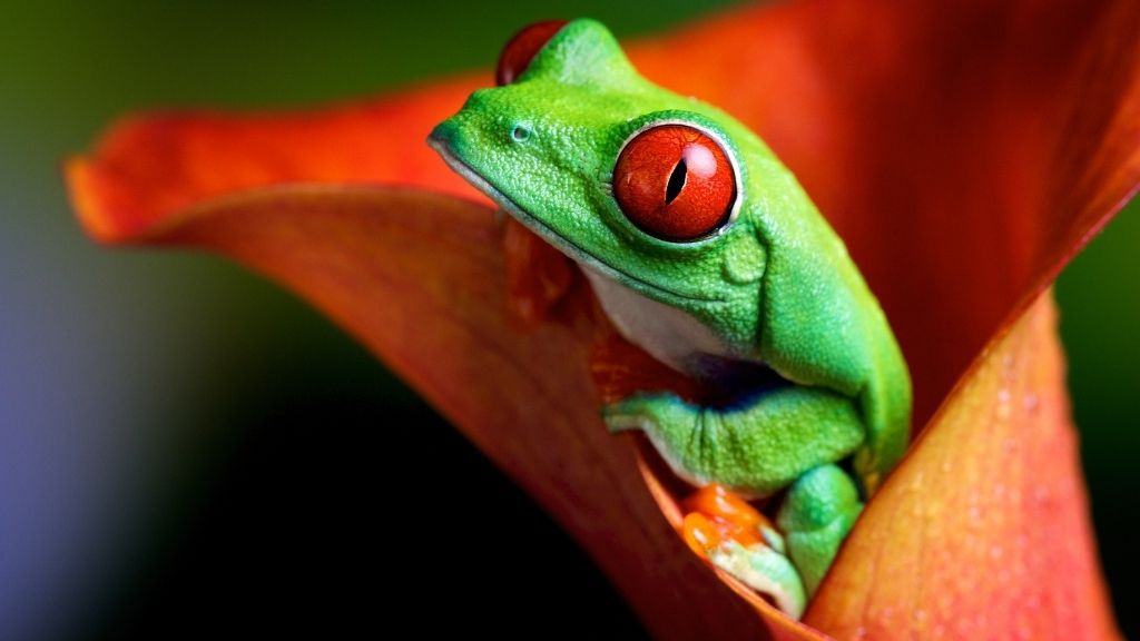 how tree frogs change color