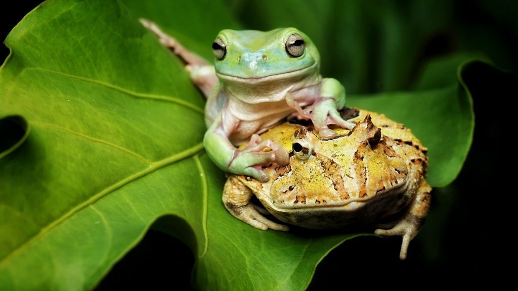 Can Pacman Frogs Live With Tree Frogs