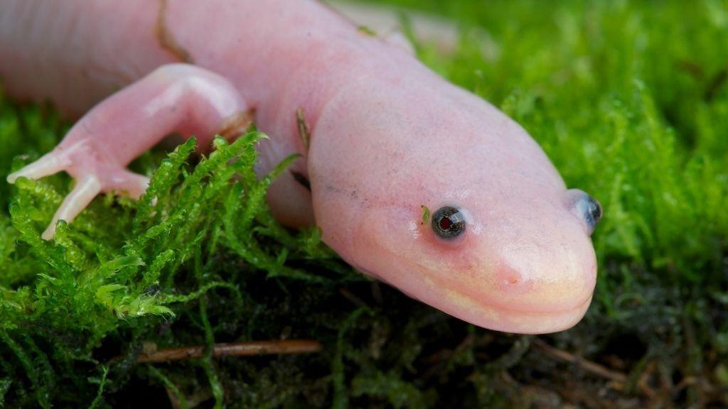 How Do You Keep A Newt As A Pet
