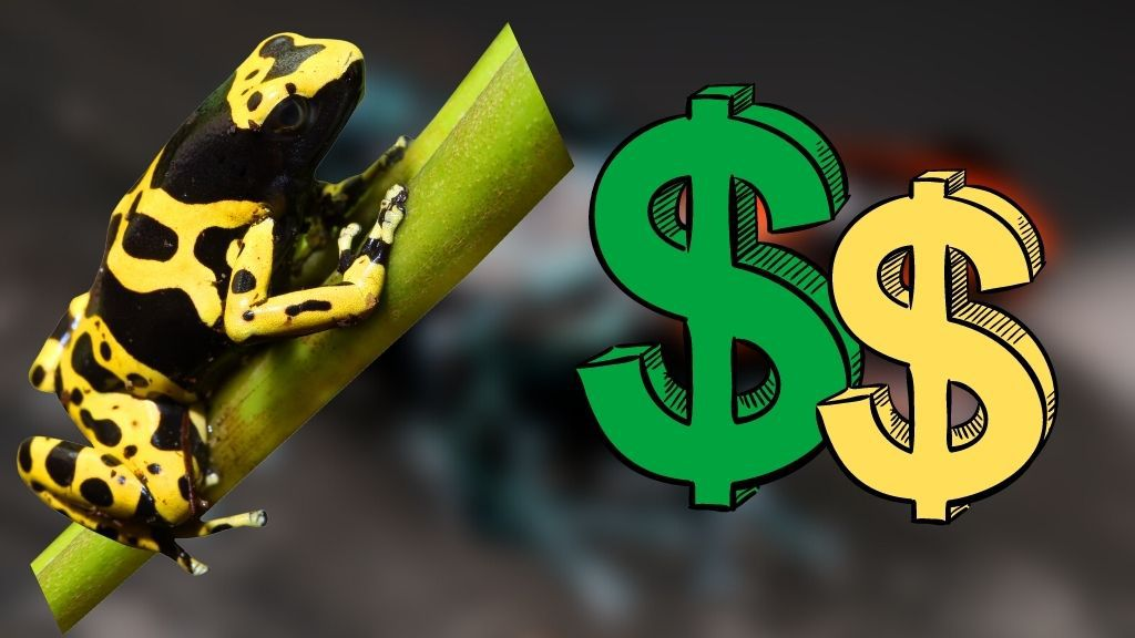 Buying A Dart Frog