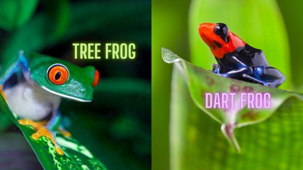 Tree Frog vs Dart Frog comparison