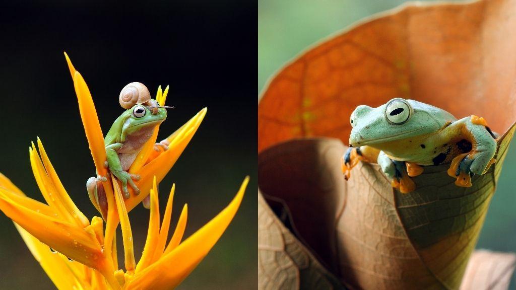 How To Setup A Tree Frog Habitat