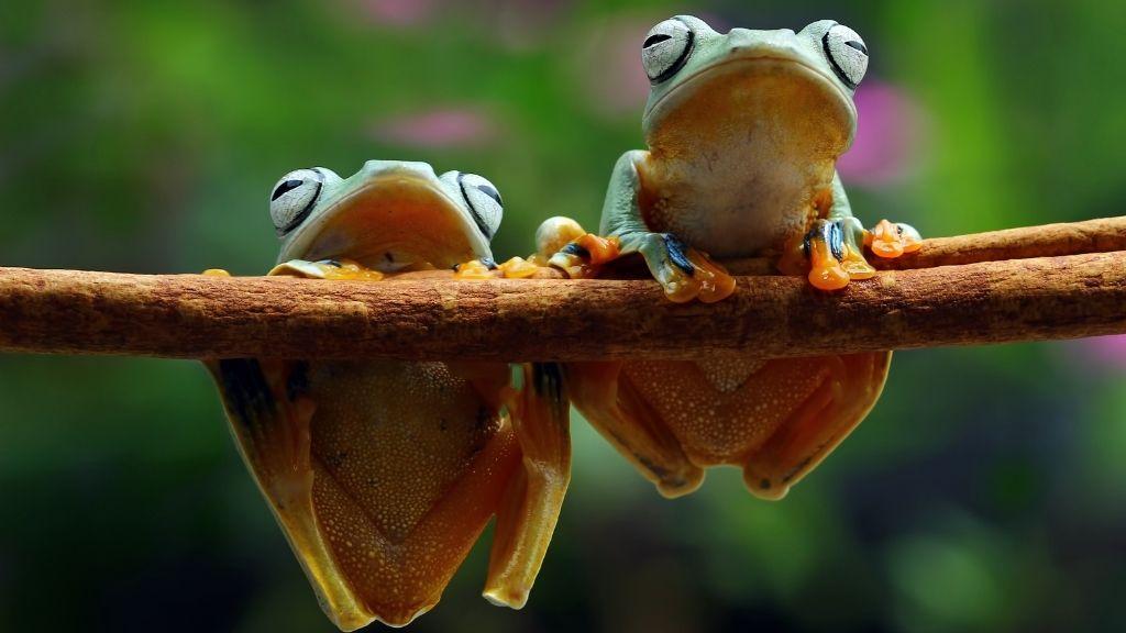 Tree Frog Diet & Feeding Guide