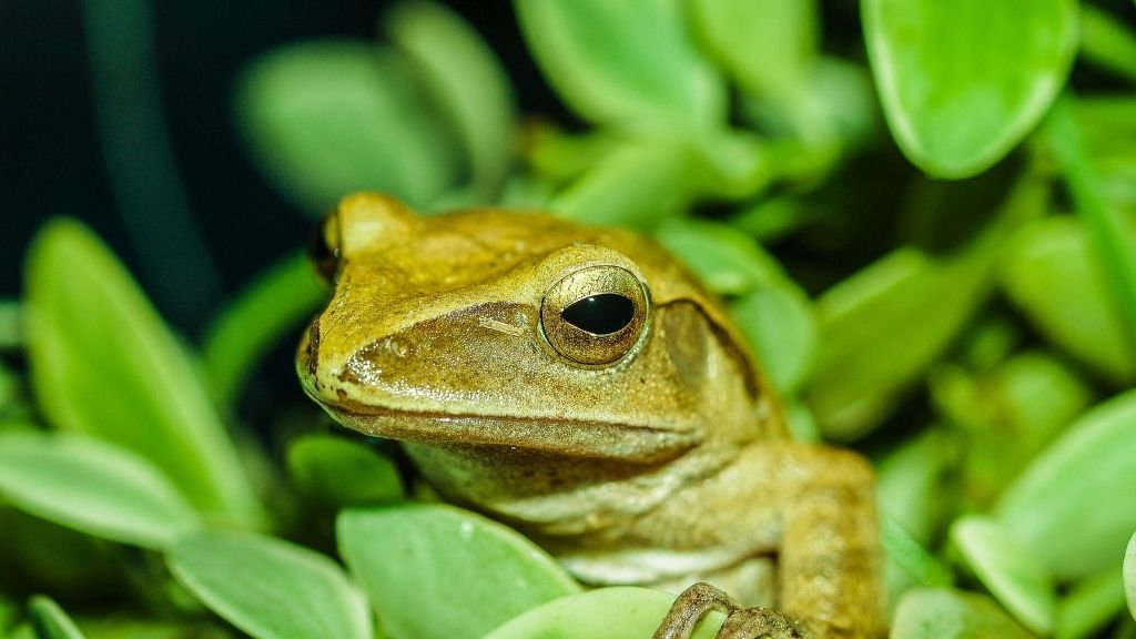 How To Pet Tree Frogs Safely
