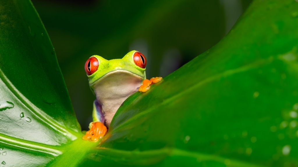 How To Treat A Sick Tree Frog