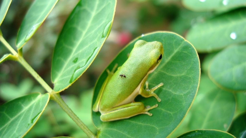 Which Live Plants Are Safe For Tree Frogs
